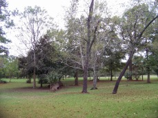 Willis Home grounds